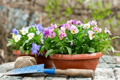 Садовничая инструменты и красочные цветки pansy стоковое изображение rf