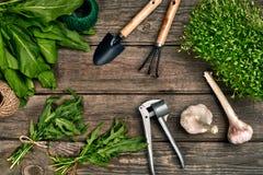 Садовничая инструменты и растительность на деревянном столе весна сада Стоковое Изображение RF