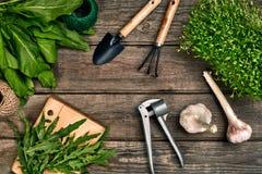 Садовничая инструменты и растительность на деревянном столе весна сада Стоковые Фотографии RF