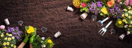 Садовничая инструменты на предпосылке почвы стоковые фото