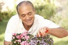садовничая старший человека стоковое изображение rf