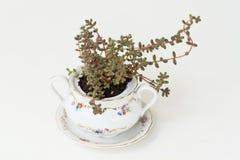Садовничая чашки фарфора Стоковое фото RF