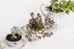 Садовничая чашки фарфора Стоковое Изображение