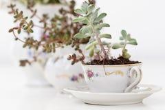 Садовничая чашки фарфора Стоковые Изображения