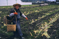 садовничая япония урбанская стоковые изображения rf