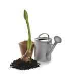 садовничая springrime Стоковая Фотография RF