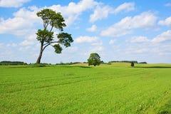 садоводство поля зеленое Стоковые Фото