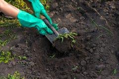 Садоводство Стоковые Фото