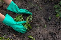 Садоводство Стоковые Изображения RF
