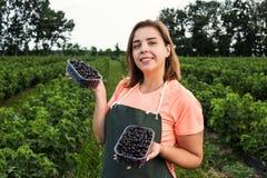 Садоводы черной смородины проектируют работу в саде с сбором, женщиной с коробкой ягод стоковые фото