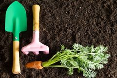 Садовые инструменты и морковь на почве резюмируют предпосылку весны Стоковая Фотография RF