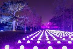 Сады во времени рождества, Лондон Kew стоковые изображения rf