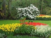 Сады Голландия Keukenhof Стоковые Изображения RF