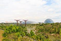 Сады заливом Сингапуром Стоковая Фотография RF