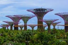 Сады заливом - Сингапур парка стоковые фото