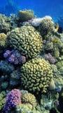 сады коралла Стоковая Фотография