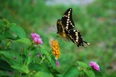 сады цветка Стоковое Фото