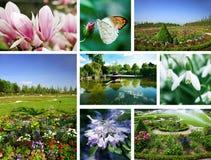 сады цветков Стоковое Фото