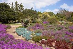 Сады Kirstenbosch ботанические стоковое изображение