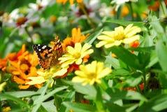 Сад бабочки в цветени! стоковые фото