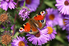 сад бабочки Стоковые Фото