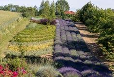 Сад ` вполне ` лаванды аранжировал Барбарой и Andrzej Olender в ³ w Ostrà 40 km от Кракова стоковые изображения rf