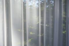 Сад в окне за прозрачными занавесами стоковое изображение