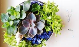 Сад в стеклянном сосуде стоковое фото rf