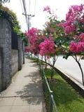 Сад в улице Стоковое Изображение