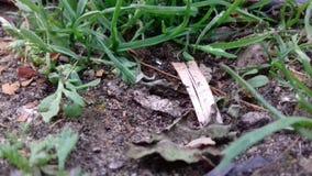 сад естественный Стоковое Фото