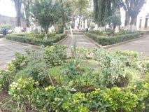 Сад зеленого цвета Morelia Стоковая Фотография
