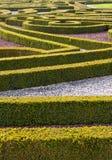 Сад изгороди Стоковые Изображения RF