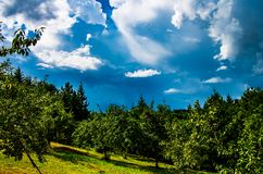 Сад и небесно-голубое стоковая фотография rf
