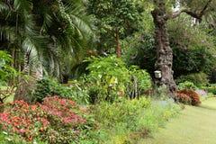 Сад и природа в Nuwara Eliya Шри-Ланке Стоковая Фотография