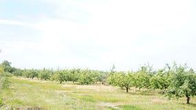 Сад и путь стоковые изображения rf
