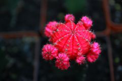 Сад кактуса взгляд сверху, разбивочный фокус стоковые фото