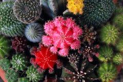 Сад кактуса взгляд сверху, разбивочный фокус стоковое изображение
