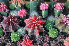 Сад кактуса взгляд сверху, разбивочный фокус стоковые изображения rf
