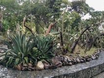 Сад кактуса в дождливом дне стоковое изображение