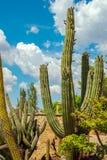 Сад кактуса в парке Стоковые Фотографии RF