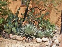 Сад кактуса в Oldtown, Альбукерке Стоковое фото RF