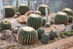 Сад кактуса, кактус засаженный в ботаническом саде Стоковые Фото