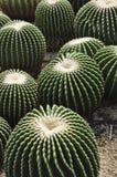 сад кактуса сделал миниой Стоковая Фотография RF