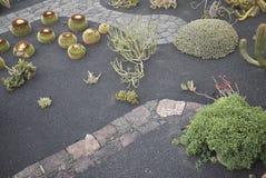 Сад кактуса Стоковая Фотография