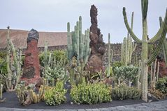 Сад кактуса Стоковые Фото