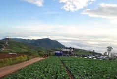 Сад капусты на berk Таиланде ушата Phu горы стоковое изображение