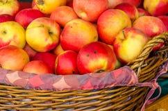 сад корзины яблок здоровый органический Стоковые Изображения RF