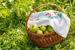 сад корзины яблок здоровый органический Стоковая Фотография RF