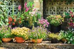 Сад красивой задворк флористический Стоковая Фотография