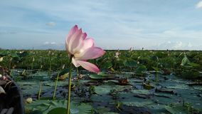 Сад лилии стоковое фото rf